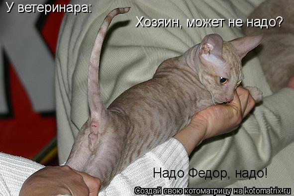 Котоматрица: У ветеринара: Хозяин, может не надо? Надо Федор, надо!