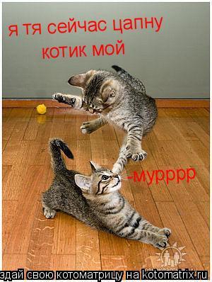 Котоматрица: я тя сейчас цапну  котик мой -мурррр