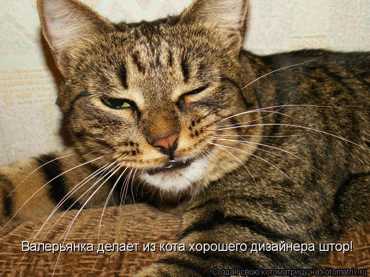 Котоматрица: Валерьянка делает из кота хорошего дизайнера штор!