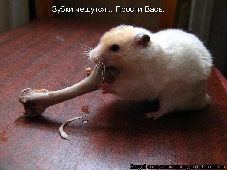Котоматрица: Зубки чешутся... Прости Вась.