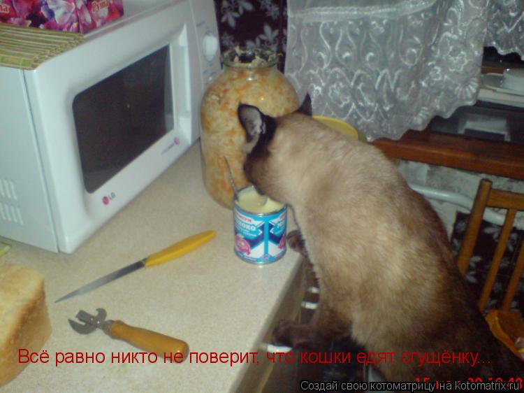 Котоматрица: Всё равно никто не поверит, что кошки едят сгущёнку...