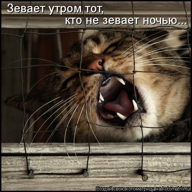 Котоматрица: Зевает утром тот, кто не зевает ночью... Зевает утром тот,