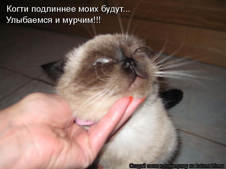 Котоматрица: Когти подлиннее моих будут... Улыбаемся и мурчим!!!