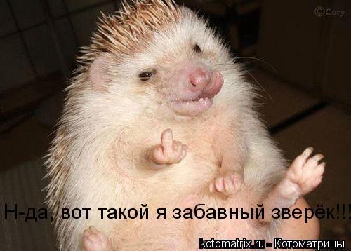 Котоматрица: Н-да, вот такой я забавный зверёк!!!