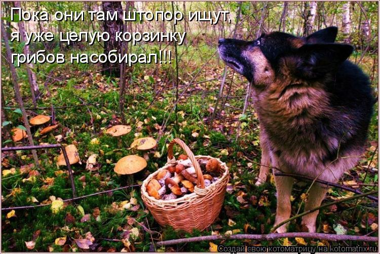 Котоматрица: Пока они там штопор ищут, я уже целую корзинку  грибов насобирал!!!