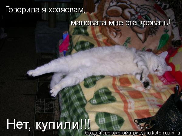 Котоматрица: Говорила я хозяевам, маловата мне будет эта кровать! Нет, купили!!! Говорила я хозяевам, маловата мне будет эта кровать! Нет, купили!!! Говорил