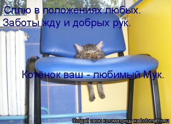 Котоматрица: Сплю в положениях любых. Заботы жду и добрых рук. Котёнок ваш - любимый Мук.