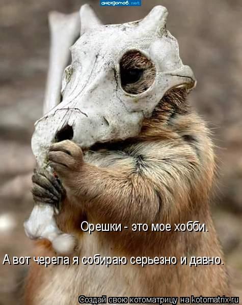 Котоматрица: Орешки - это мое хобби. А вот черепа я собираю серьезно и давно.