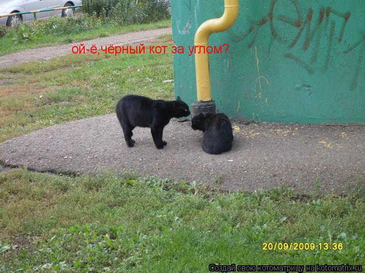 Котоматрица: ой-ё,чёрный кот за углом?