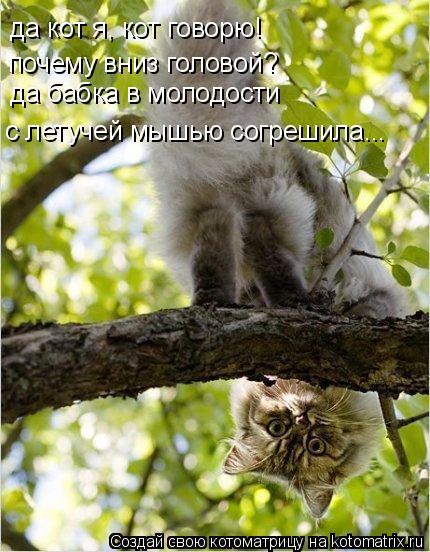 Котоматрица: да кот я, кот говорю! почему вниз головой? да бабка в молодости  с летучей мышью согрешила...