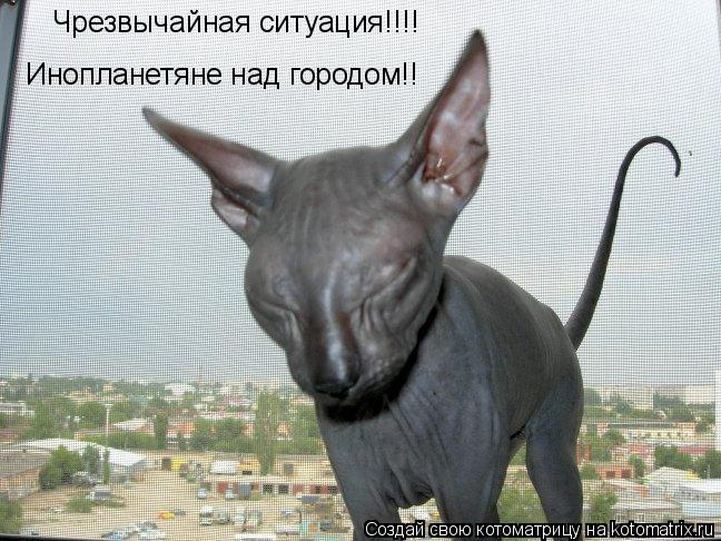 Котоматрица: Чрезвычайная ситуация!!!! Инопланетяне над городом!!