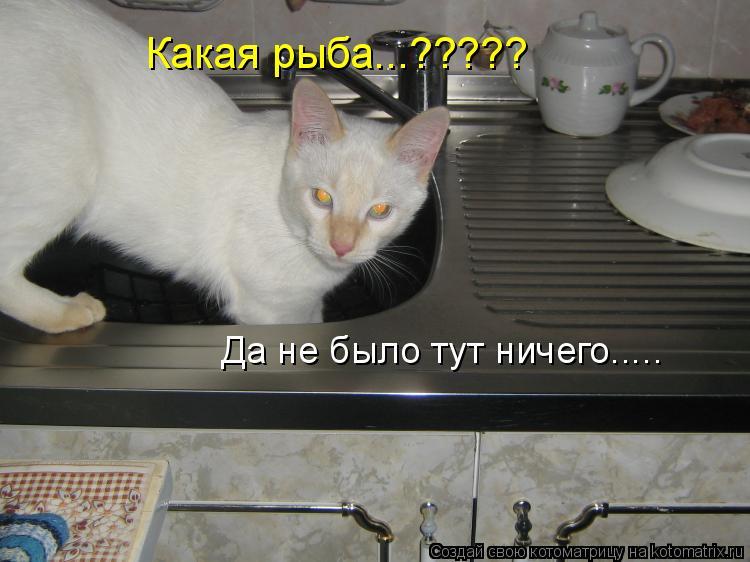 Котоматрица: Какая рыба...????? Да не было тут ничего.....