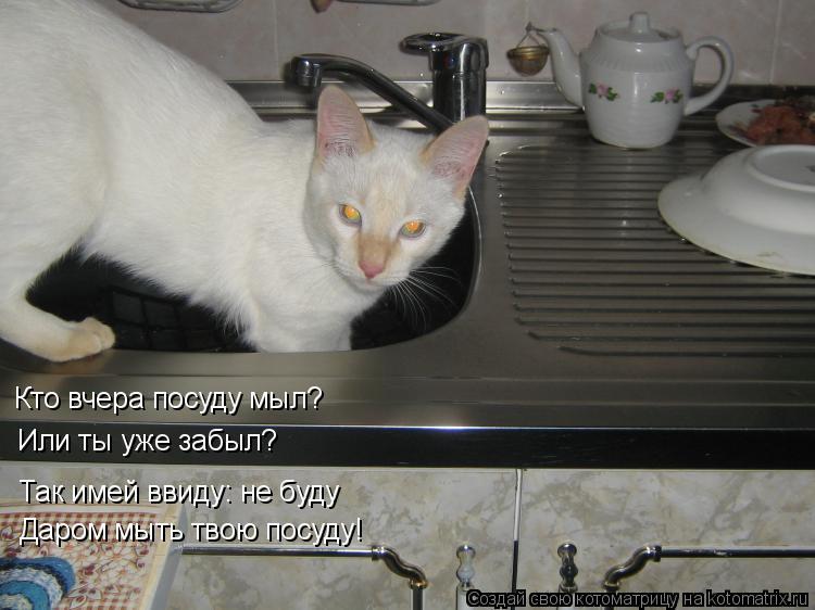 Котоматрица: Кто вчера посуду мыл? Или ты уже забыл? Так имей ввиду: не буду Даром мыть твою посуду!