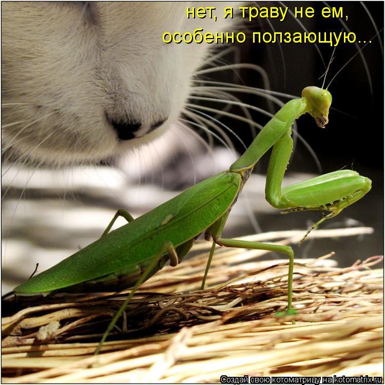 Котоматрица: нет, я траву не ем, особенно ползающую...