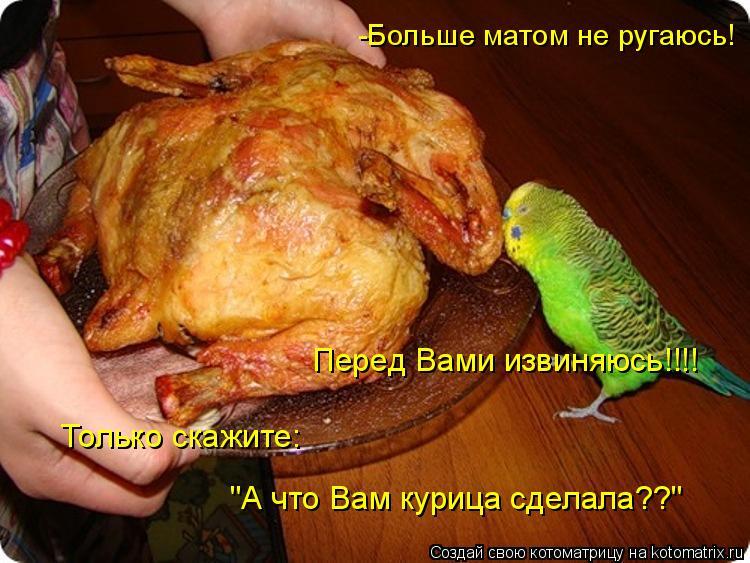 """Котоматрица: -Больше матом не ругаюсь!  Перед Вами извиняюсь!!!! Только скажите: """"А что Вам курица сделала??"""""""
