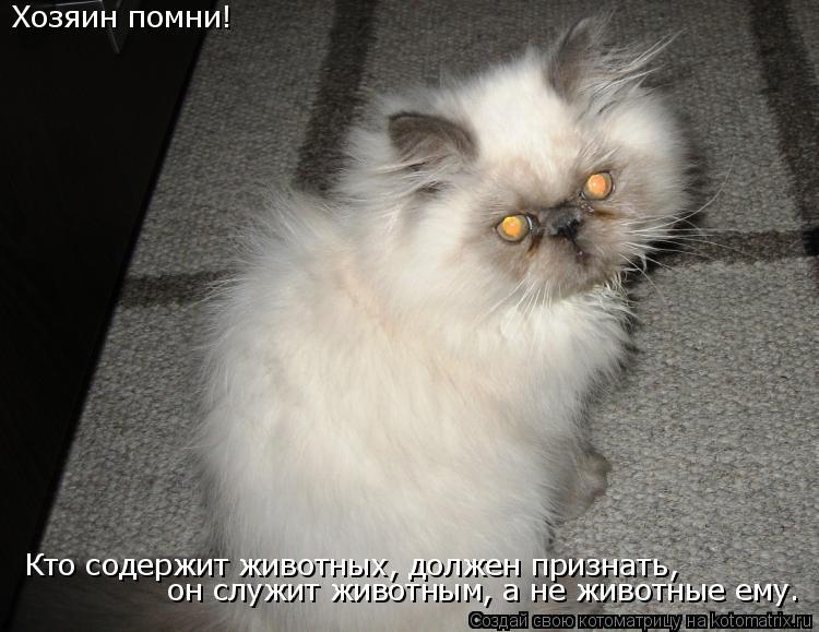 Котоматрица: Хозяин помни! Кто содержит животных, должен признать, он служит животным, а не животные ему.