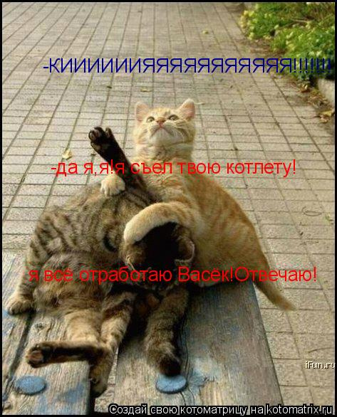 Котоматрица: -КИИИИИИЯЯЯЯЯЯЯЯЯЯЯ!!!!!!! -да я,я!я съел твою котлету! я всё отработаю Васёк!Отвечаю!