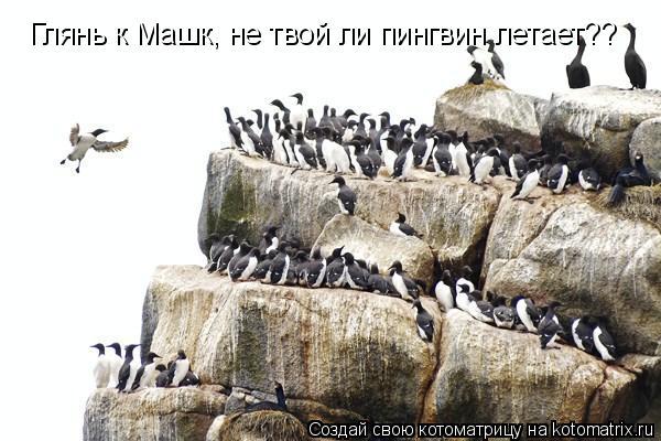 Котоматрица: Глянь к Машк, не твой ли пингвин летает??