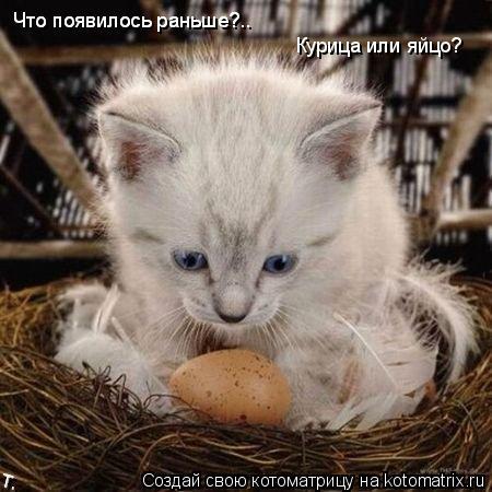 Котоматрица: Что появилось раньше?.. Что появилось раньше?.. Курица или яйцо?