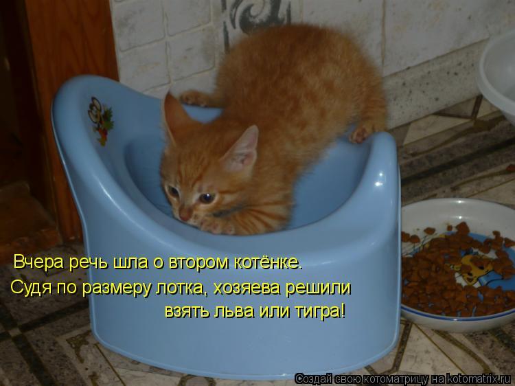Котоматрица: Вчера речь шла о втором котёнке. Судя по размеру лотка, хозяева решили взять льва или тигра!