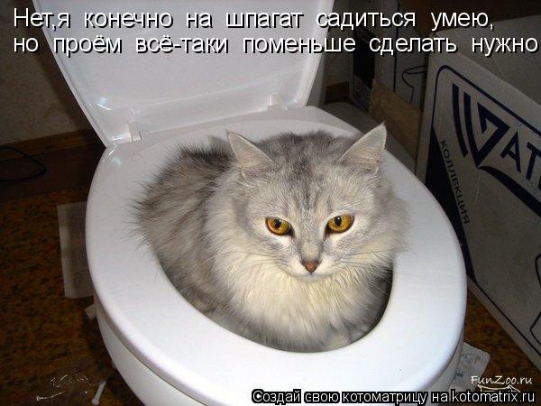 Котоматрица: Нет,я  конечно  на  шпагат  садиться  умею, но  проём  всё-таки  поменьше  сделать  нужно!