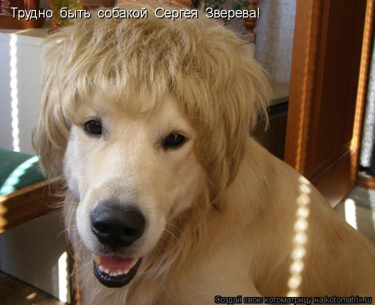 Котоматрица: Трудно  быть  собакой  Сергея  Зверева!