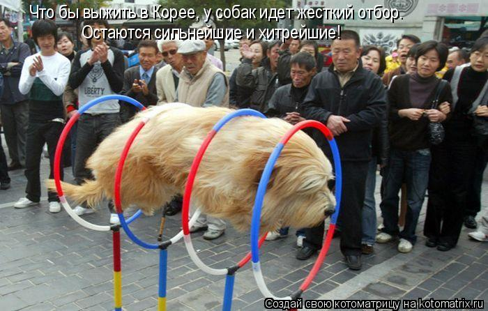 Котоматрица: Что бы выжить в Корее, у собак идет жесткий отбор. Остаются сильнейшие и хитрейшие!