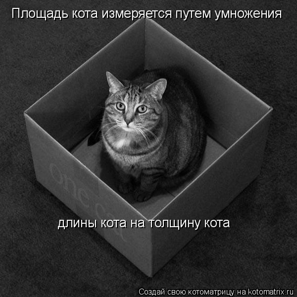 Котоматрица: Площадь кота измеряется путем умножения длины кота на толщину кота
