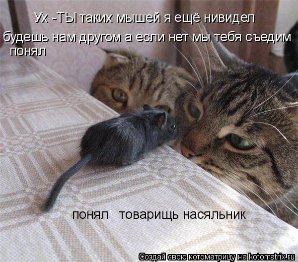 Котоматрица: Ух -ТЫ таких мышей я ещё нивидел  будешь нам другом а если нет мы тебя съедим              понял         понял   товарищь насяльник