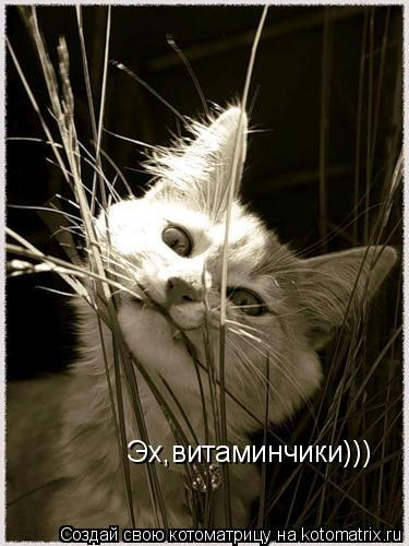 Котоматрица: Эх,витаминчики))) Эх,витаминчики)))