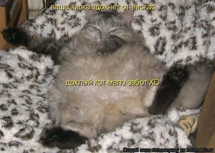 Котоматрица: ваша киска здохнет от вискас ваша киска здохнет от вискас дохлый кот мало забот XD