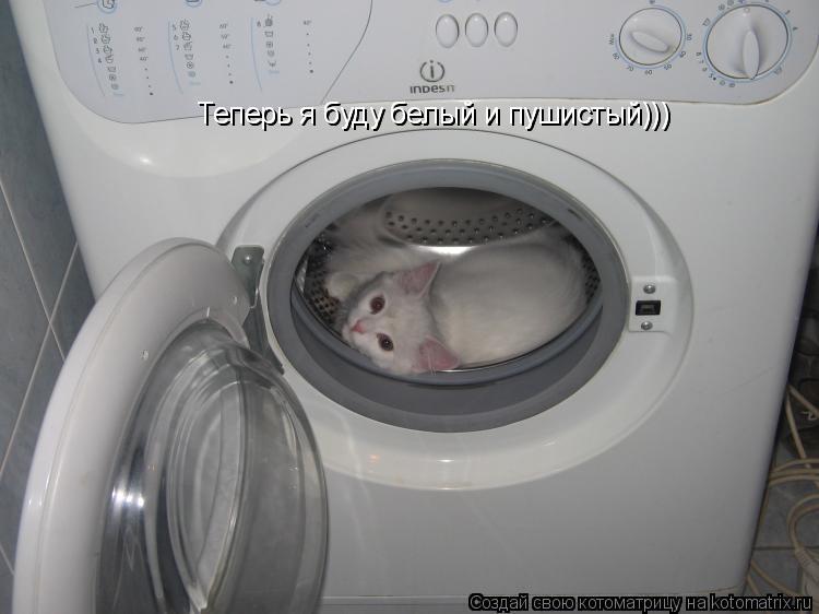 Котоматрица: Теперь я буду белый и пушистый))) Теперь я буду белый и пушистый)))
