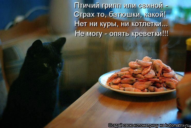 Котоматрица: Птичий грипп или свиной - Страх то, батюшки, какой! Нет ни куры, ни котлетки... Не могу - опять креветки!!!