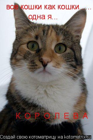 Котоматрица: все кошки как кошки...... все кошки как кошки...... одна я... К  О  Р  О  Л  Е  В  А