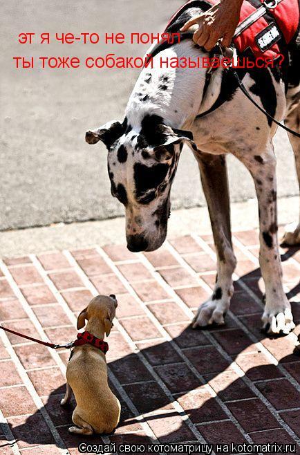 Котоматрица: эт я че-то не понял ты тоже собакой называешься?