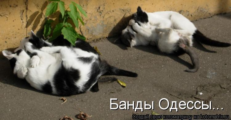 Котоматрица: Банды Одессы...