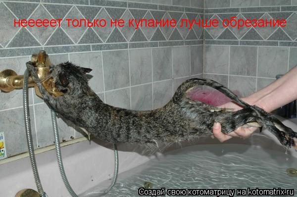 Котоматрица: нееееет только не купание лучше обрезание