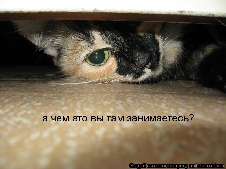 Котоматрица: а чем это вы там занимаетесь?.. а чем это вы там занимаетесь?..