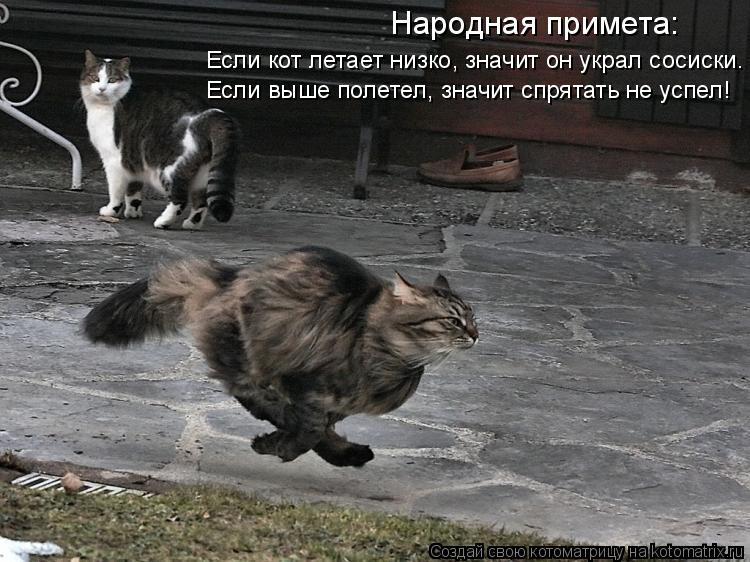 Котоматрица: Народная примета: Если кот летает низко, значит он украл сосиски. Если выше полетел, значит спрятать не успел!