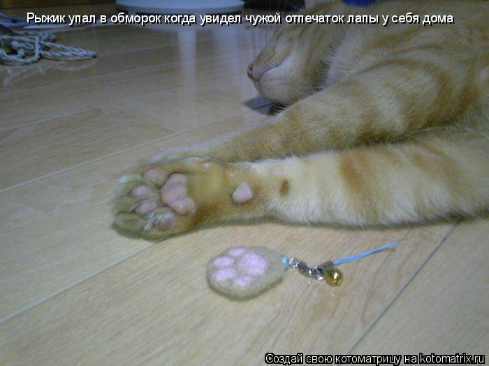 Котоматрица: Рыжик упал в обморок когда увидел чужой отпечаток лапы у себя дома