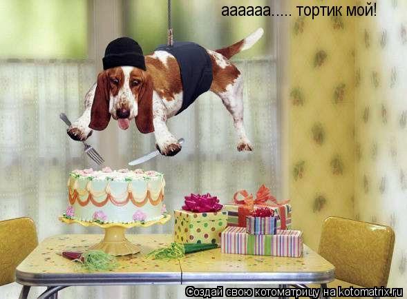 Котоматрица: аааааа..... тортик мой!