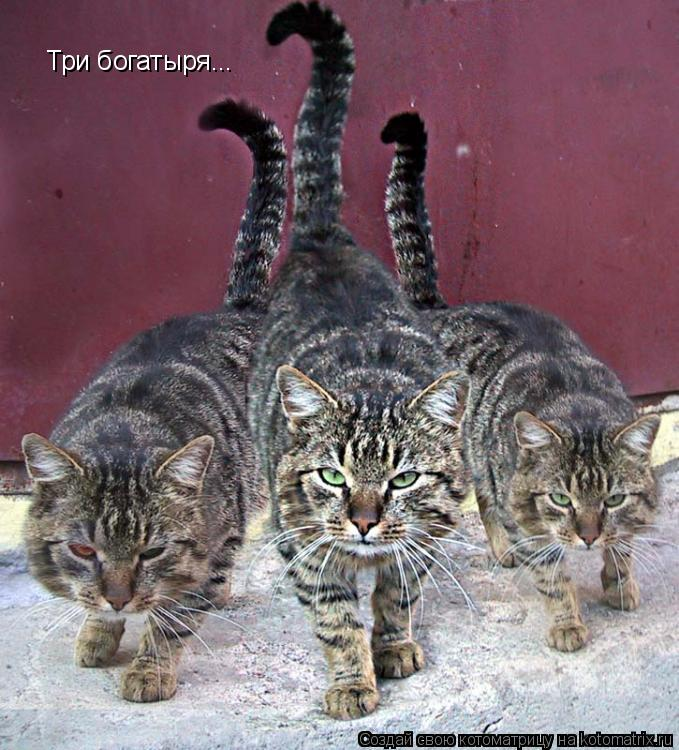 Котоматрица: Три богатыря...