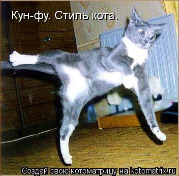 Котоматрица: Кун-фу. Стиль кота.