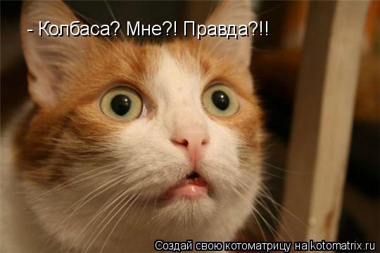 Котоматрица: - Колбаса? Мне?! Правда?!!