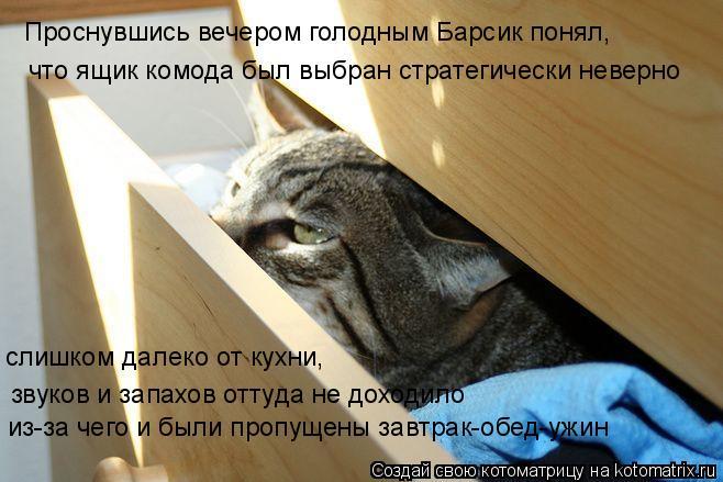 Котоматрица: что ящик комода был выбран стратегически неверно слишком далеко от кухни, звуков и запахов оттуда не доходило Проснувшись вечером голодны
