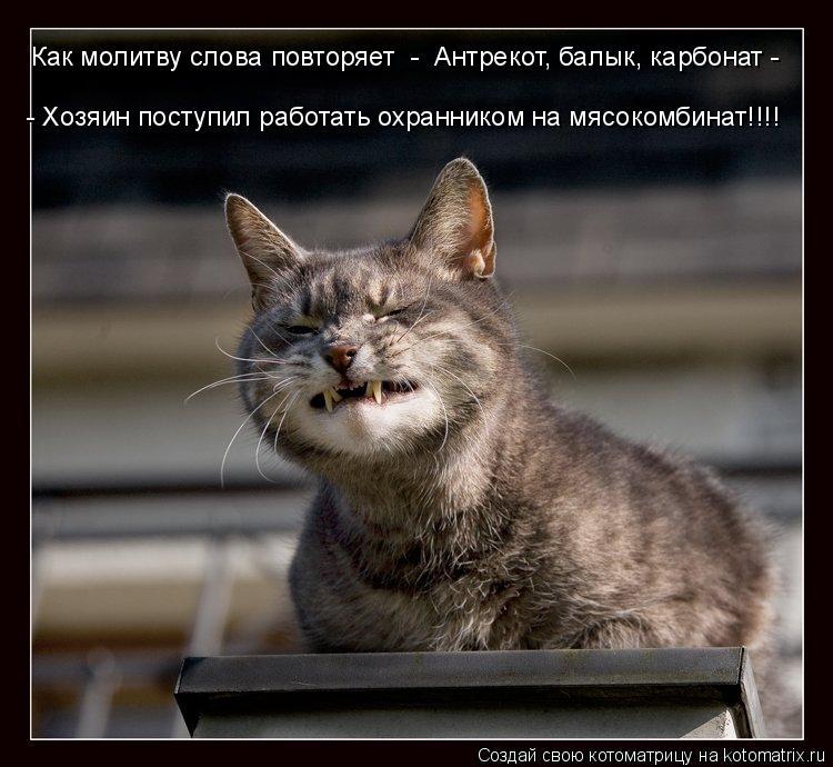Котоматрица: Как молитву слова повторяет  - «Антрекот, балык, карбонат - - Хозяин поступил работать охранником на мясокомбинат!!!!»