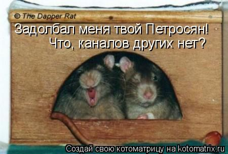 Котоматрица: Задолбал меня твой Петросян!  Что, каналов других нет?