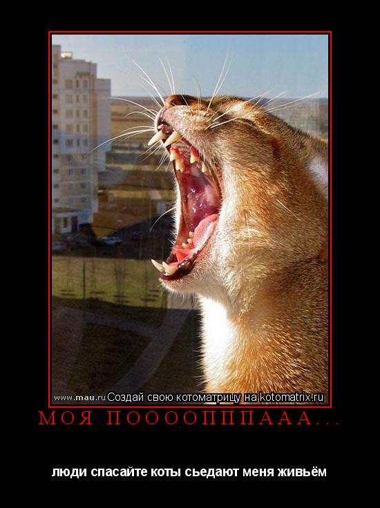 Котоматрица: Моя поооопппааа... люди спасайте коты сьедают меня живьём