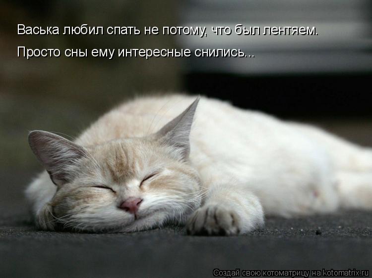 Котоматрица: Васька любил спать не потому, что был лентяем. Просто сны ему интересные снились...