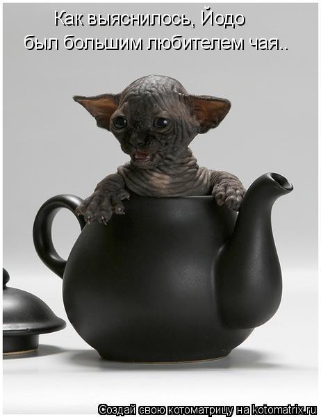 Котоматрица: Как выяснилось, Йодо  был большим любителем чая..